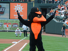 Orioles launch