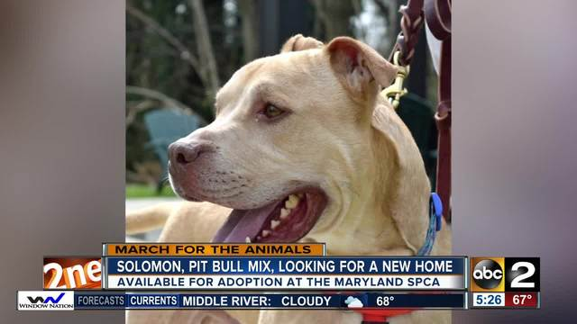 Solomon is in need of a loving home