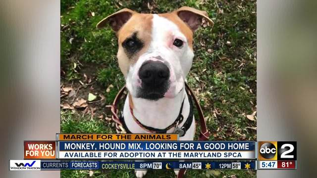 Meet 1-year-old hound mix- Monkey