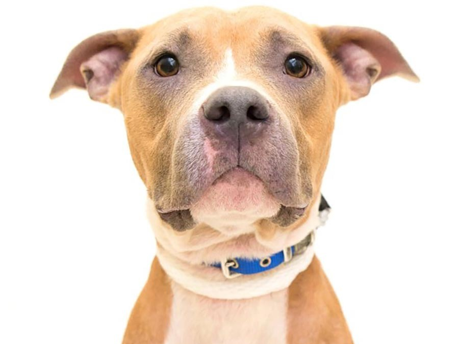 BARCS announce new facial recognition technology for lost pets