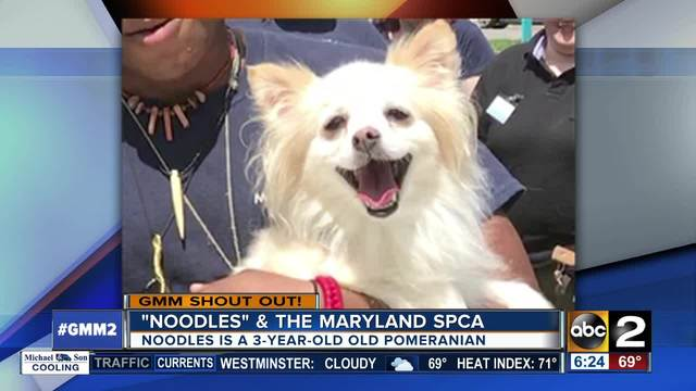 Good morning from the Maryland SPCA-