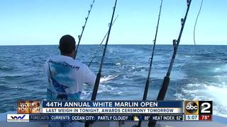 44th White Marlin Open wraps up Friday