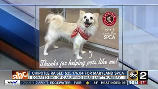 Chipotle releases money raised for SPCA