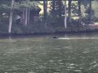 Bear takes a dip in Deep Creek Lake