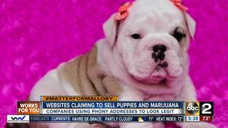 Websites claiming to sell puppies & pot in Md.