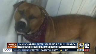 Man charged after stabbing pit bull in neck