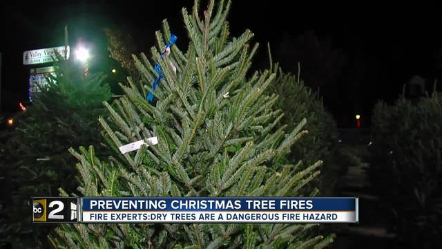 Christmas tree shortage expected to last through 2025