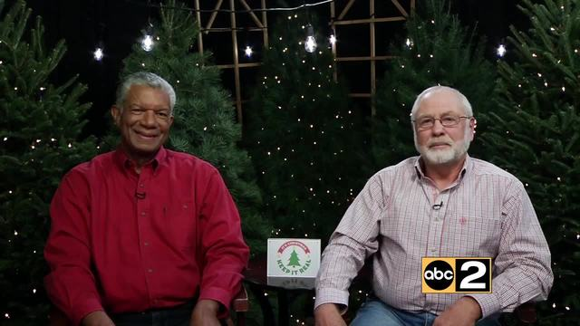 AAA reminds drivers to properly secure Christmas trees after fatal crashes