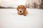 Keep your pets safe from the bitter cold