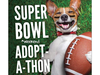 BARCS holding Super Bowl Adopt-a-Thon