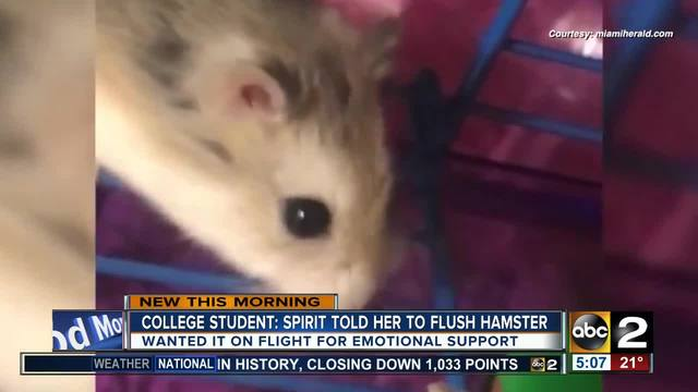 Texas State student: Airline told me to flush pet hamster at BWI