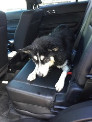 Marine unit rescues dog that fell into water