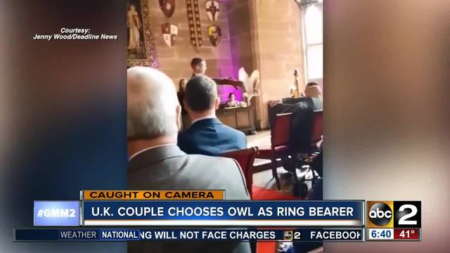 Ring bearer owl attacks best man at wedding WMAR2NEWS