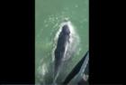 Whale makes major splash on Ocean City shore