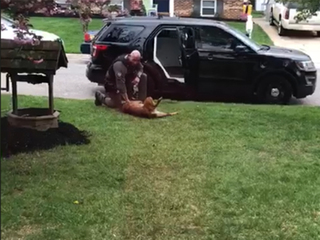 K-9 refuses to work until he gets belly rub