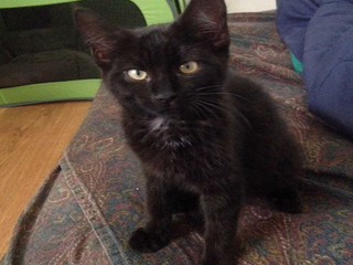 Cat escapes cage at BWI Airport