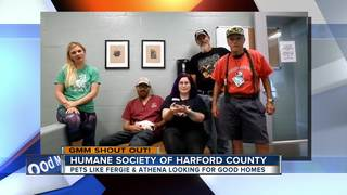 Good morning to Humane Society of Harford Co.