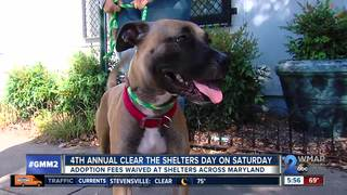 Adoption fees waived for Clear the Shelters Day